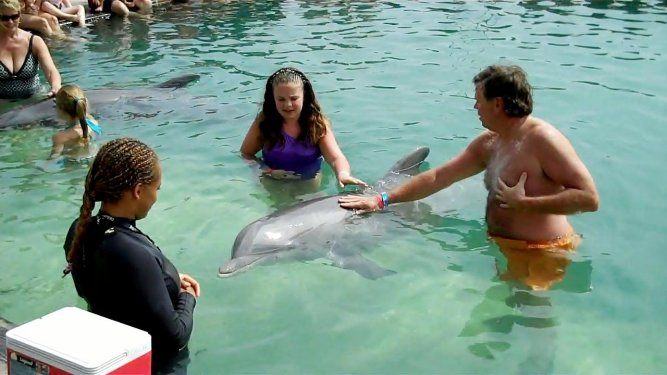 Dolphin Encounter Interact with dolphins in the natural environment of The Dolphin Experience lagoon. Choose from a variety of exciting dolphin Interactions.... you can take half and full day trips Swim with the Dolphin and snorkel Grand Bahama and its amazing reefs.