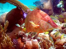 Freeport Bahamas snorkeling photo